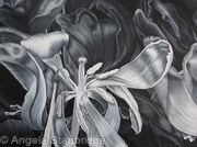Tulipmania 16 - Black and White