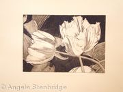 Tulipmania 3 - Etching #2