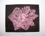 Caspin Dark Aquatint Etching Pink