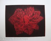 Caspin Dark Tulip Aquatint Etching Red
