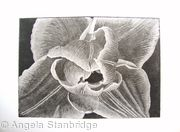 Compostella Tulip Aquatint Etching B/W