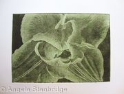 Compostella Tulip Aquatint Etching Lt Green