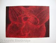 Compostella Tulip Aquatint Etching Red