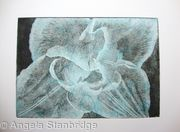 Compostella Tulip Aquatint Etching Turq