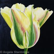 Golden Artist Tulip