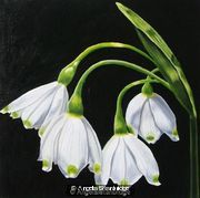 Snowdrop 1