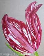 Red Flame Tulip