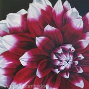 Dahlia Edinburgh