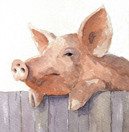 Pig Over A Fence Watercolour