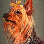 Yorkie