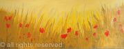 Gold Poppy Field