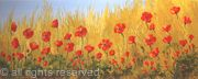 Natural Poppy Field