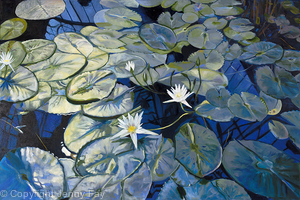 Blue Lily Pond