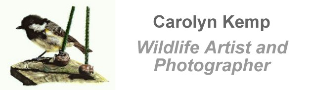 Carolyn Kemp - wildlife artist and photographer