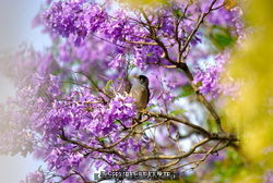 Australia, (Noisy Miner) enjoying a blaze of colour