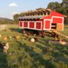 Chix_tractor_square