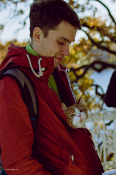 Финик — кот путешественник