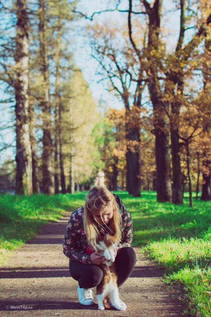 Прогулка с котом Фиником по парку