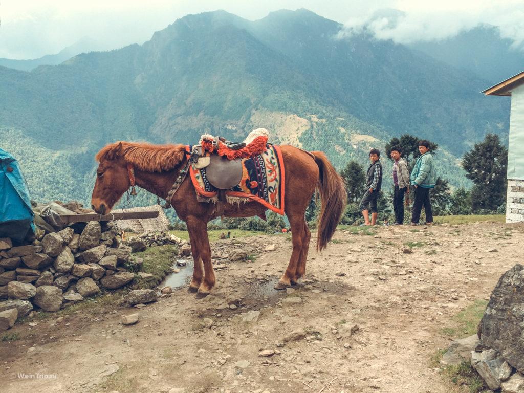 Коняшка и дети в Лукле