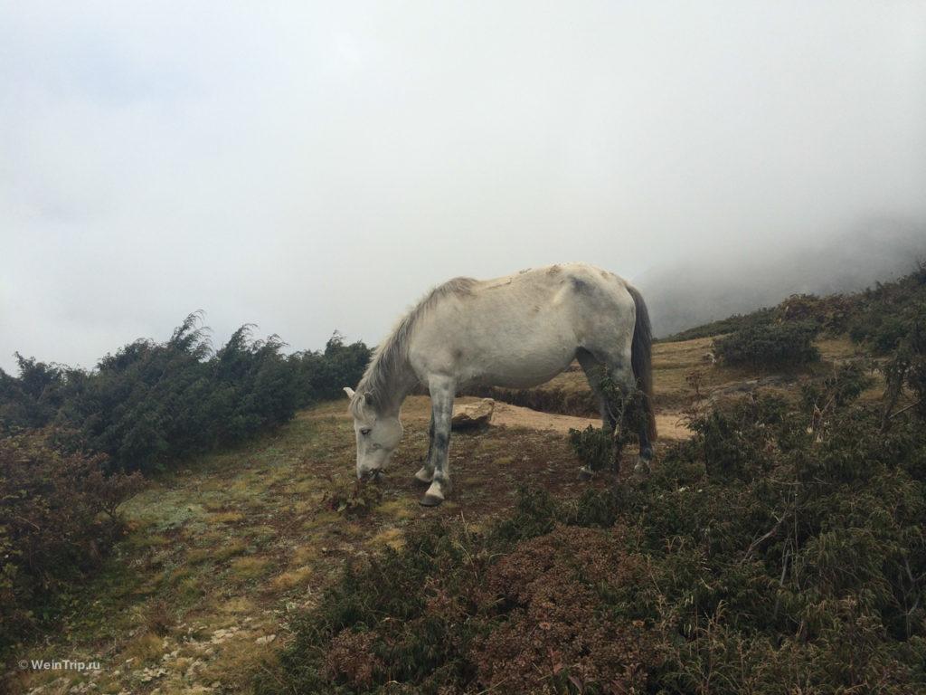 лошадки в тумане Намче Базар