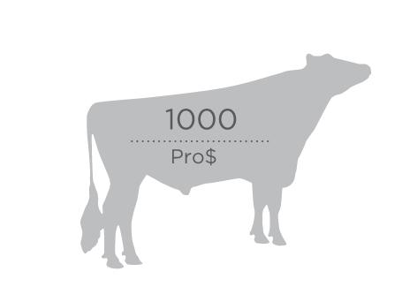 Prodollar_1000-cow