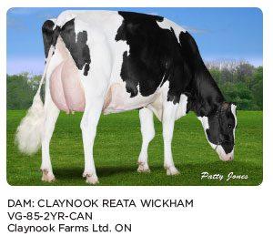 claynook-reata-wickham
