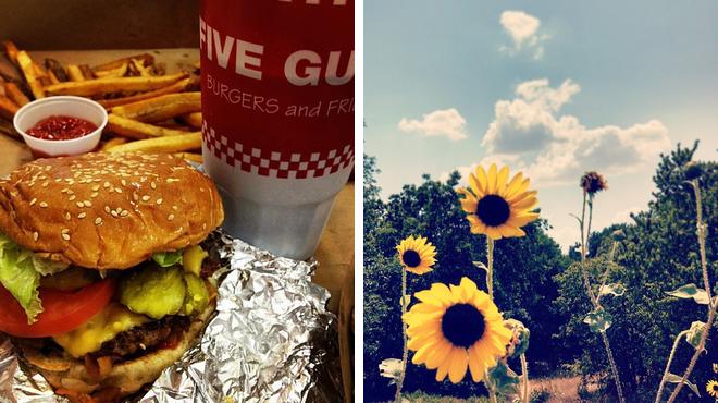 Burger joint ⇨ Park