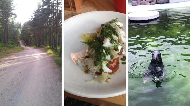 Trail ⇨ Modern european restaurant ⇨ Zoo