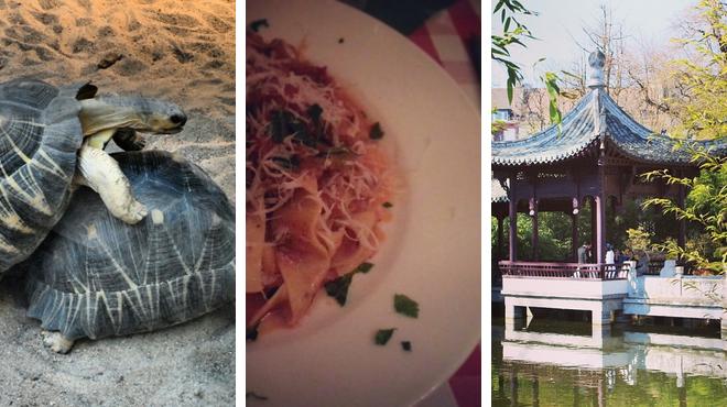 Zoo ⇨ Italian restaurant ⇨ Park