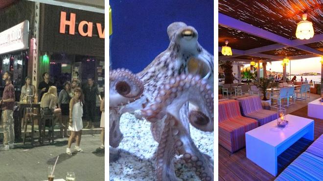 Night club ⇨ Aquarium ⇨ Night club