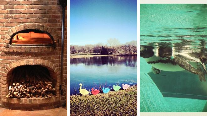Pizza place ⇨ Park ⇨ Zoo