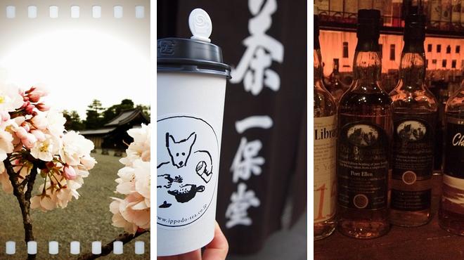 Park ⇨ Tea room ⇨ Bar