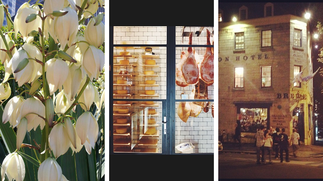 Botanical garden ⇨ Restaurant ⇨ Pub