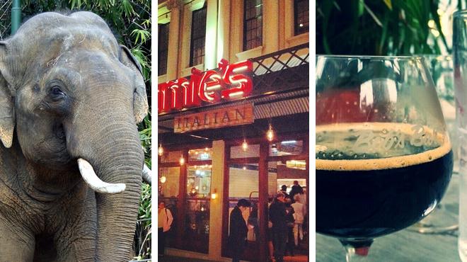 Zoo ⇨ Italian restaurant ⇨ Bar
