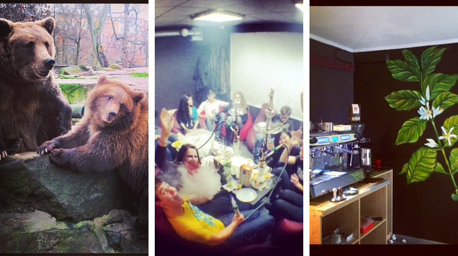 Zoo ⇨ Gaming cafe ⇨ Coffee shop
