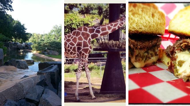 Park ⇨ Zoo ⇨ Ice cream shop