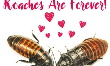 Wesselman's Name a Roach for Valentine's Day