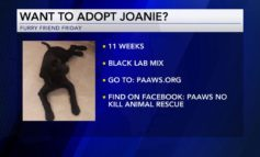 Furry Friend Friday: Adopt Joanie