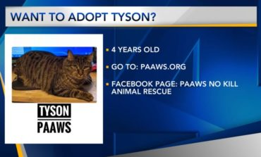 Furry Friend Friday: Tyson