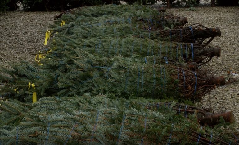 Tri-State Food Bank Offers Christmas Tree In Exchange For Donations