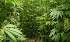 Kentucky to See Growth of Hemp Industry