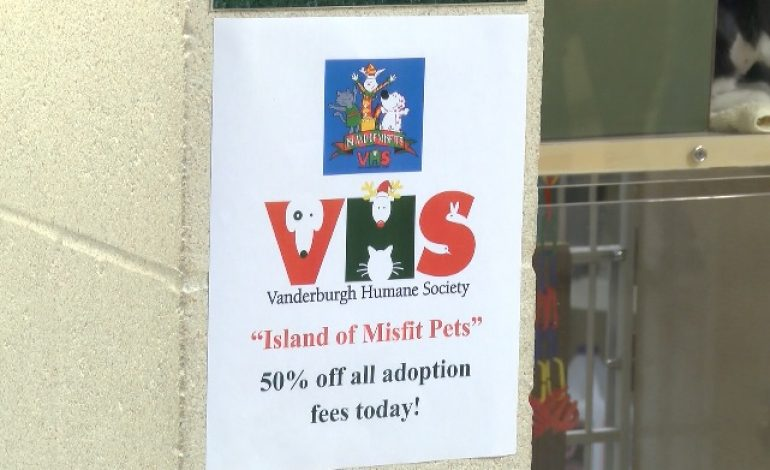 VHS to Offer Reduced Pet Adoption Fees Saturday