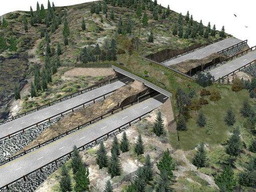 Ontario opens first highway wildlife crossing