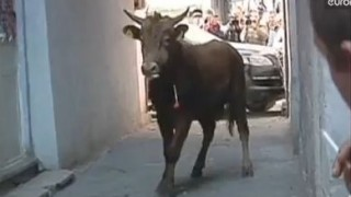 Video: Raging bull attacks traffic cop in street