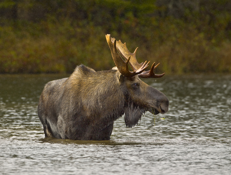Where To Find Wildlife On Canadian Road Trips Wheels Ca