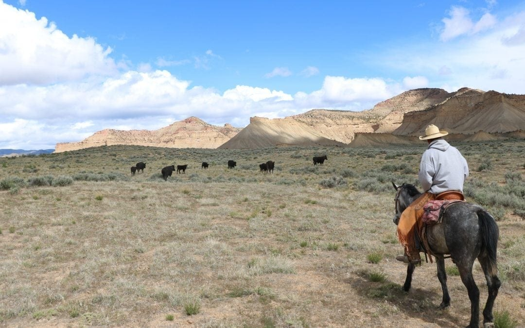 Modern Day Cowboys of The Wild Colorado Desert