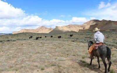 Modern Day Cowboys of The Wild Colorado Desert