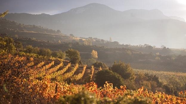 Autumn in the high elevation vineyards of granja nuestra se%c3%b1ora de remelluri