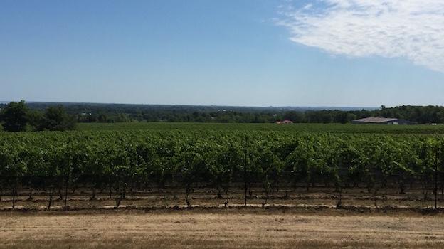 Panorama of tawse vineyards copy
