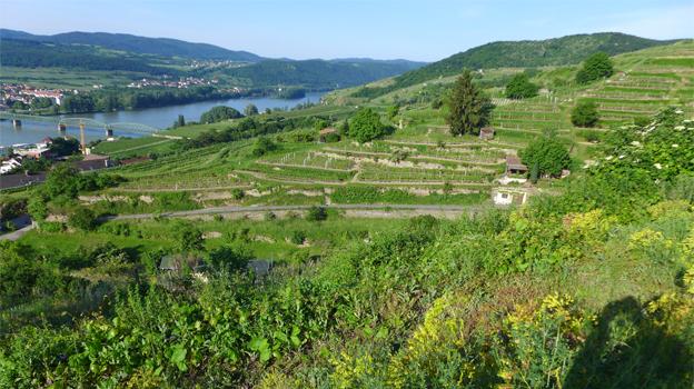 Stein vineyards cover